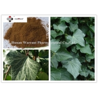 Ivy Leaf Extract  10% Hederacoside C  Brown Yellow Powder Manufactures