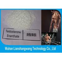 Pharmaceutical Testosterone Anabolic Steroid CAS 1255-49-8 Testosterone Phenylpropionate Manufactures