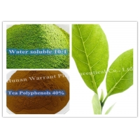 95% Polyphenols Antihyperlipidemic Green Tea Leaf Extract Manufactures