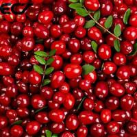 Quality Anti Aging Organic Food Ingredients Freeze Dried Cranberry Powder Prevents Scurvy for sale