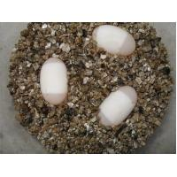 gold yellow expanded vermiculite for grow seeding,make  substrate,hatch eggs Manufactures