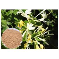 Quality Anti Bacterial Natural Flower Extracts Chlorogenic Acid 5% Honeysuckle Flower Extract Powder for sale