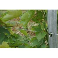 China 3.0mm Thickness Metal Grape Vine Trellis Post 275G Zinc For Grape Growing on sale