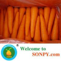 Fresh Carrot Manufactures