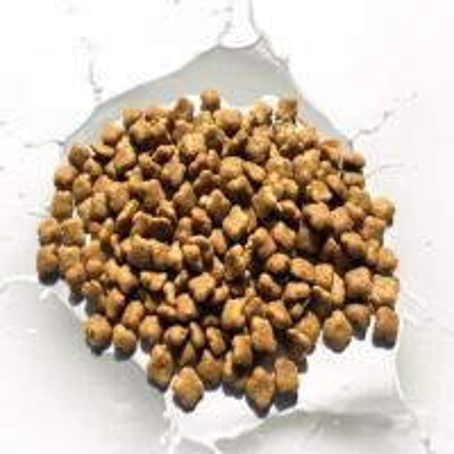 Dry Cat Food With High Crude Fiber
