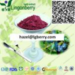 Pure Natural Lonicera caerulea Powder Manufactures