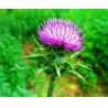 Buy cheap CAS65666-07-1 80% Silymarin UV Herbal Extract Powder light yellow powder from wholesalers