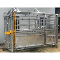 Standard Vet Cattle Crush with Y section Australia Standard Complied Manufactures