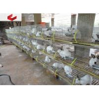 Wire Mesh Rabbit Cages for Rabbit Farm Manufactures