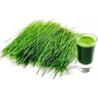 Super Green  Organic Young Barley Grass Powder Health Care Product Factory Sale Manufactures