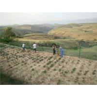 Environmentally Friendly Green Vinyl Coated Welded Wire Fencing For Slope Protection Manufactures