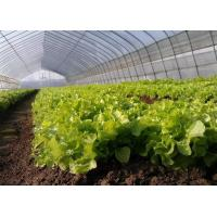 Beautiful Polyethylene Film Greenhouse Good Pressure Resistance For Lettuce Planting Manufactures