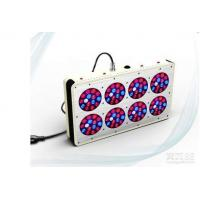 China Easy Operation Red Blue Led Grow Lights For Weed 50000 Hrs Lifespan on sale