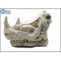 China Solid Fish Tank Decorations , Exotic Environments T-Rex Skull Aquarium Ornament on sale
