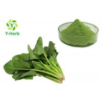 China Vegetable Juice Concentrate Spinach Powder Organic Superfood 100% Water Soluble on sale