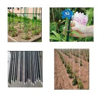 Pultrusion Fiberglass Plastic GRP Nursery Stakes , FRP Tree Stakes / Garden Stakes Manufactures