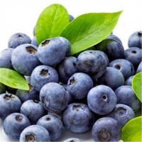 Acai Berry / Brazilian Acai Extract Manufactures