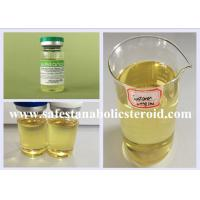 Bodybuilding Injectable Anabolic Steroids Liquid Testosterone Blend Sustanon 250mg/ml Manufactures