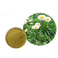China Powdered Natural Plant Extracts Erigeron Breviscapus Extract HPLC / UV Test Method on sale