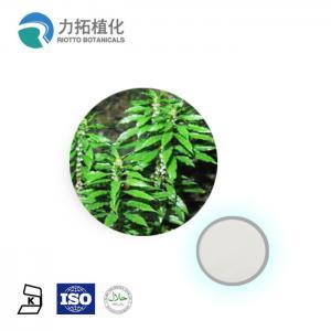 China Grade AAAAA Plant Extract Powder Huperzia Serrate Extract CAS 102158-79-6 on sale