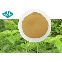 China 100% Natural Mulberry Leaf Extract with 1- Deoxynojirimycin ( 1% DNJ ) Reduces Blood Sugar on sale