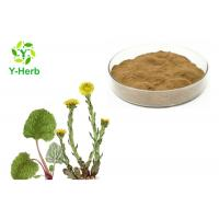 Pure Flos Farfarae Powder 10:1 50:1 Common Coltsfoot Flower/Leaf Extract Manufactures