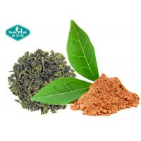 China Natural Botanical Extracts 98.0% Polyphenols Green Tea Extract with EGCG 98% on sale