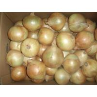 Fresh Onion Manufactures