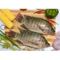 China export tilapia whole round, tilapia gutted & scaled on sale