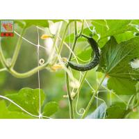 China Plastic Climbing Plant Support Netting , Garden Mesh For Climbing Plants on sale