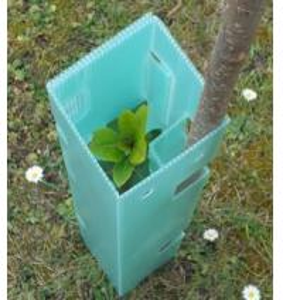 China 2mm 3mm Corflute Tree Guard / Vine Guard / Tree Shelter on sale
