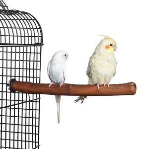 12'' natural hardwood perch for bird,hand made Manufactures