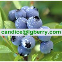Food supplement organic blueberry powder Manufactures
