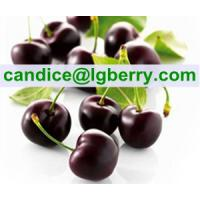 Natural black cherry extract powder Manufactures