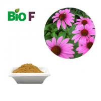 Antifungal Animal Feed Additive / Echinacea Extract Powder 4% Polyphenols Manufactures