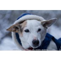 2011 Stylish Dog Sweater for Winter Manufactures