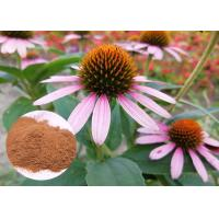 China Whole Herb Antibacterial Plant Extracts Echinacea Purpurea Powder Soluble In Water on sale