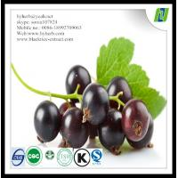 Organic black currant extract powder anthocyanidin Manufactures