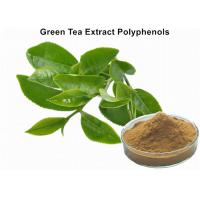China Organic Green Tea Extract Weight Loss , Bulk Supplements Green Tea Extract Anti - Cancer on sale