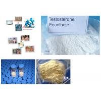 Primobolan Steroids Powder Methenolone Enanthate CAS 303-42-4 Nandrolone Steroids Manufactures