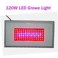 China OEM Customized Led Plant Growing Lighting 120W AC85 - 265V Red / Blue 300mA on sale