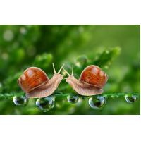 Quality 100% Snail Extract Natural Cosmetic Ingredients Light Yellow Fine Powder for sale