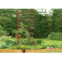 Metal Garden Tomato Plant Stakes  Pack size  L73 Pack size  h 36 Tall or Towering, You Need Our Ladder Trellis Manufactures