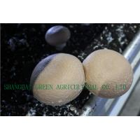 Quality FRESH PORTABELLA MUSHROOM for sale