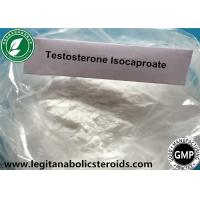 White Steroid Powder Testosterone Isocaproate For Gain Mass CAS 15262-86-9 Manufactures