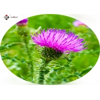 Brown Powder 60% Silymarin Milk Thistle Plant Extract Manufactures