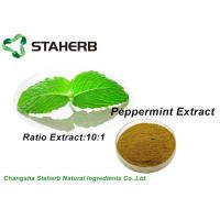 Quality Pure Nature Organic Peppermint Leaf Extract Brown Powder 10/1 Ratio By TLC for sale