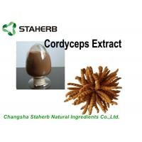 Antibacterial Cordyceps Extract 10%-40% Polysaccharides Powder By HPLC Manufactures