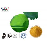 China Weight Loss Pure Herbal Extracts  , Lotus Leaf Extract Powder For Flavonoids Herbal Medicine on sale