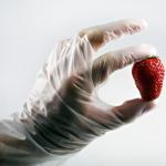 Poly Clear Food Handling Gloves Internal Lubrication Alkali Resistant Manufactures